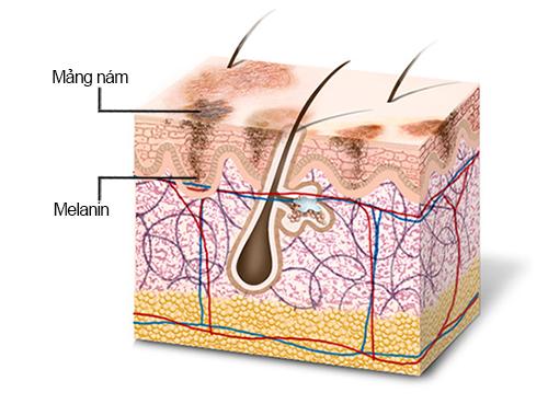 làm giảm quá trình sản xuất melanin - Acid Citric là hoạt chất gì trong mỹ phẩm? Acid Citric có tác dụng gì trong quy trình skincare da mặt?